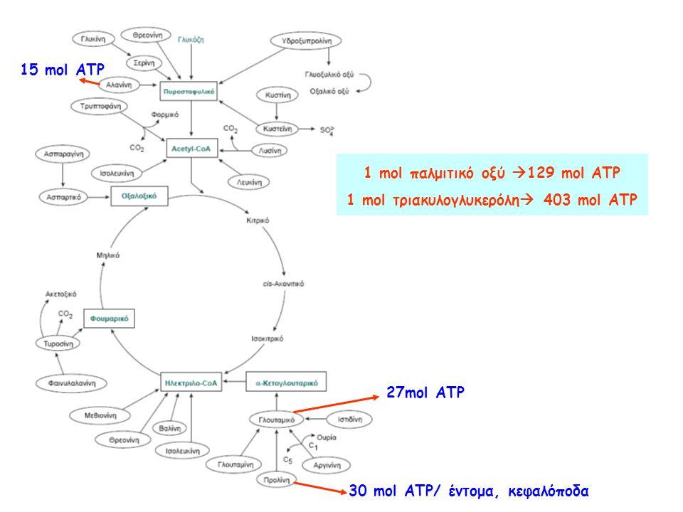 15 mol ATP 27mol ATP 30 mol ATP/ έντομα, κεφαλόποδα 1 mol παλμιτικό οξύ  129 mol ATP 1 mol τριακυλογλυκερόλη  403 mol ATP