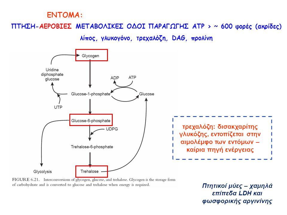 ΕΝΤΟΜΑ: ΠΤΗΣΗ-ΑΕΡΟΒΙΕΣ ΜΕΤΑΒΟΛΙΚΕΣ ΟΔΟΙ ΠΑΡΑΓΩΓΗΣ ATP > ~ 600 φορές (ακρίδες) λίπος, γλυκογόνο, τρεχαλόζη, DAG, προλίνη τρεχαλόζη: δισακχαρίτης γλυκόζης, εντοπίζεται στην αιμολέμφο των εντόμων – καίρια πηγή ενέργειας Πτητικοί μύες – χαμηλά επίπεδα LDH και φωσφορικής αργινίνης