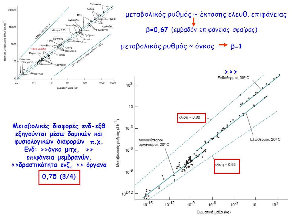 >>> μεταβολικός ρυθμός ~ έκτασης ελευθ.