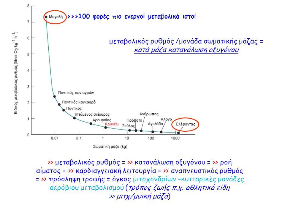 μεταβολικός ρυθμός /μονάδα σωματικής μάζας = κατά μάζα κατανάλωση οξυγόνου >>>100 φορές πιο ενεργοί μεταβολικά ιστοί >> μεταβολικός ρυθμός = >> κατανάλωση οξυγόνου = >> ροή αίματος = >> καρδιαγγειακή λειτουργία = >> αναπνευστικός ρυθμός = >> πρόσληψη τροφής = όγκος μιτοχονδρίων –κυτταρικές μονάδες αερόβιου μεταβολισμού (τρόπος ζωής π.χ.