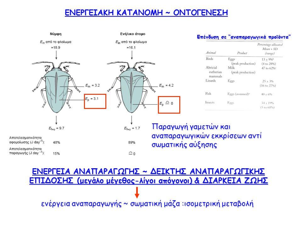 ΕΝΕΡΓΕΙΑΚΗ ΚΑΤΑΝΟΜΗ ~ ΟΝΤΟΓΕΝΕΣΗ Παραγωγή γαμετών και αναπαραγωγικών εκκρίσεων αντί σωματικής αύξησης ΕΝΕΡΓΕΙΑ ΑΝΑΠΑΡΑΓΩΓΗΣ ~ ΔΕΙΚΤΗΣ ΑΝΑΠΑΡΑΓΩΓΙΚΗΣ ΕΠΙΔΟΣΗΣ (μεγάλο μέγεθος-λίγοι απόγονοι) & ΔΙΑΡΚΕΙΑ ΖΩΗΣ ενέργεια αναπαραγωγής ~ σωματική μάζα :ισομετρική μεταβολή Επένδυση σε αναπαραγωγικά προϊόντα