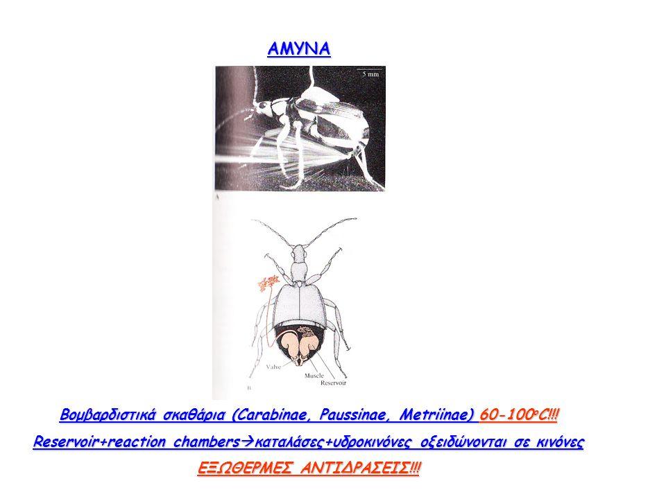 ΑΜΥΝΑ Βομβαρδιστικά σκαθάρια (Carabinae, Paussinae, Metriinae) 60-100 o C!!.
