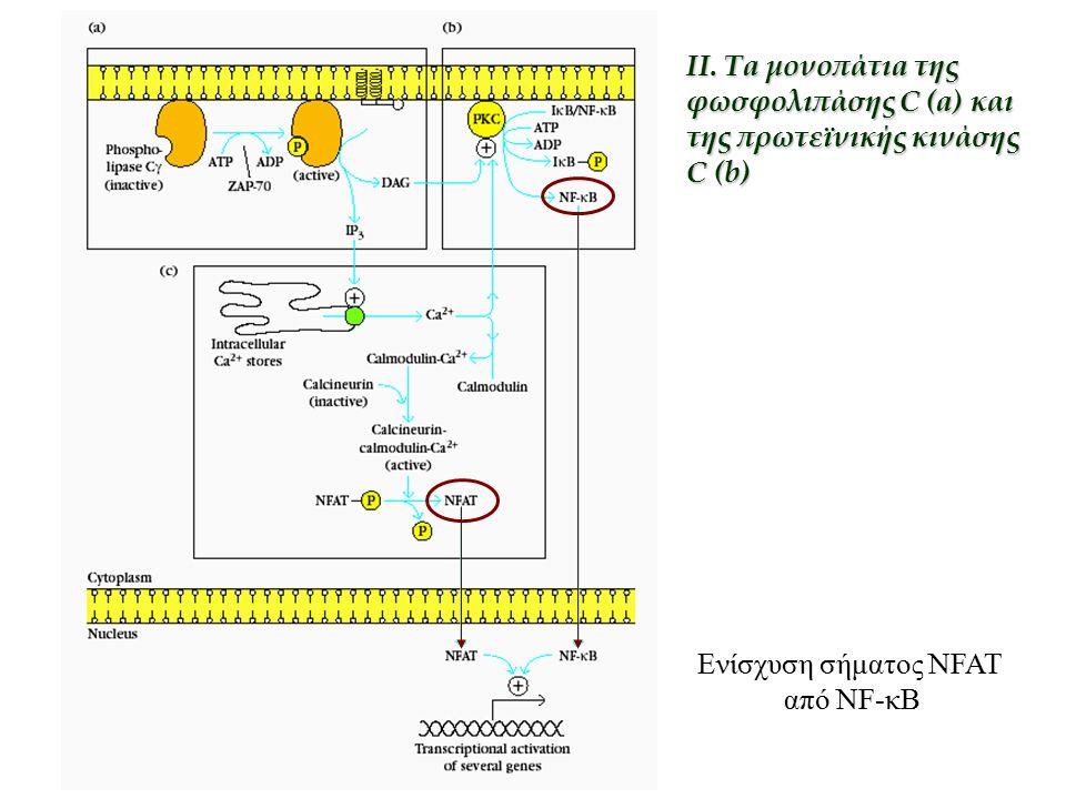 Ενίσχυση σήματος NFAT από NF-κB II. Ta μονοπάτιa της φωσφολιπάσης C (a) και της πρωτεϊνικής κινάσης C (b)
