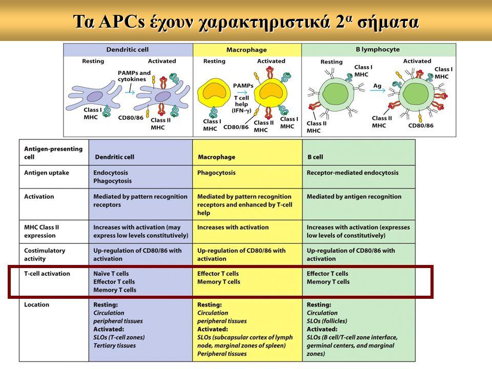 Τα APCs έχουν χαρακτηριστικά 2 α σήματα