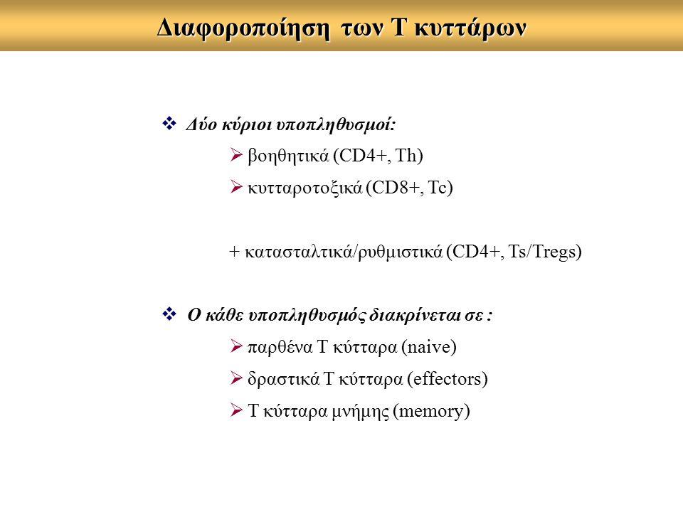 Διαφοροποίηση των Τ κυττάρων  Δύο κύριοι υποπληθυσμοί:  βοηθητικά (CD4+, Th)  κυτταροτοξικά (CD8+, Tc) + κατασταλτικά/ρυθμιστικά (CD4+, Ts/Tregs) 