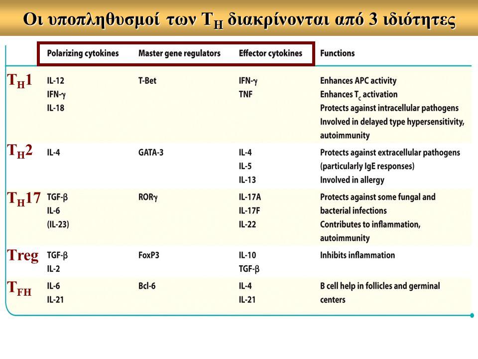 Οι υποπληθυσμοί των Τ Η διακρίνονται από 3 ιδιότητες Τ Η 1 Τ Η 2 Τ Η 17 Τreg T FH