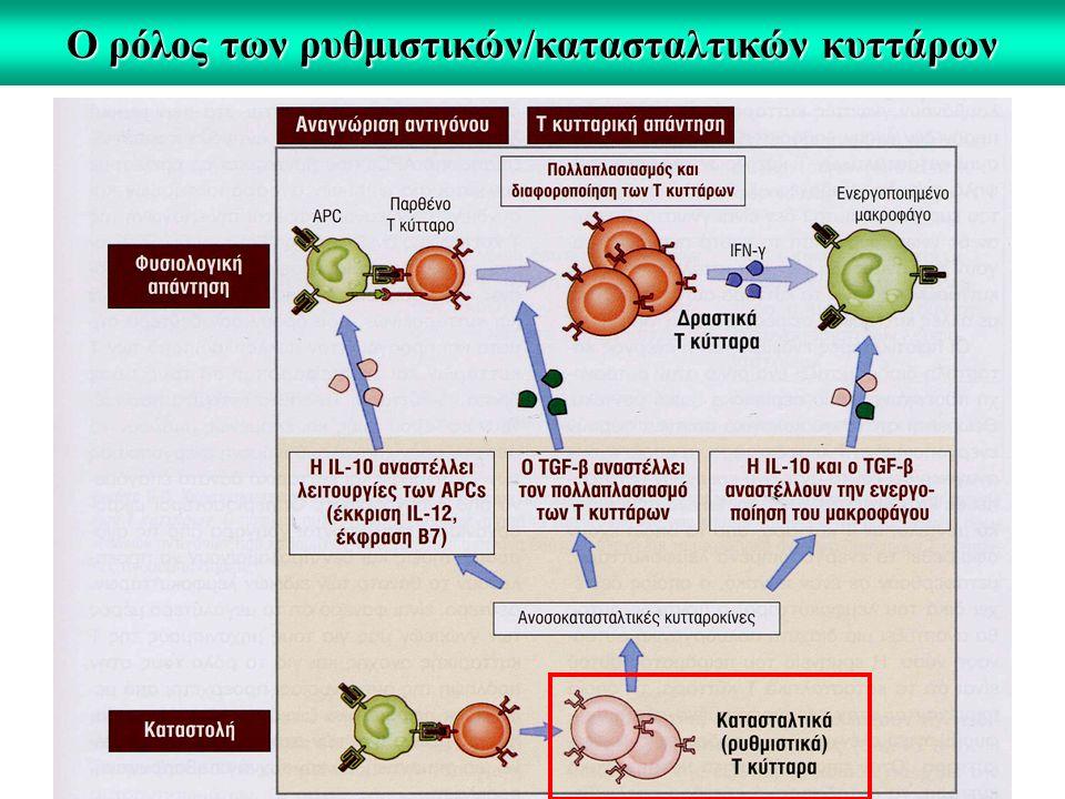 Ο ρόλος των ρυθμιστικών/κατασταλτικών κυττάρων