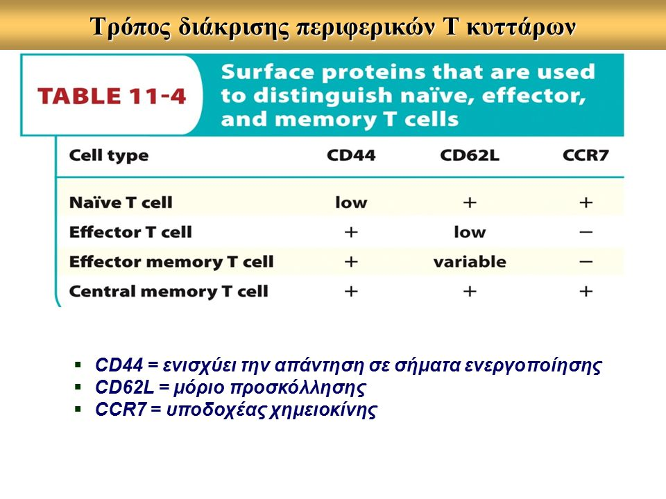 Τρόπος διάκρισης περιφερικών Τ κυττάρων  CD44 = ενισχύει την απάντηση σε σήματα ενεργοποίησης  CD62L = μόριο προσκόλλησης  CCR7 = υποδοχέας χημειοκίνης