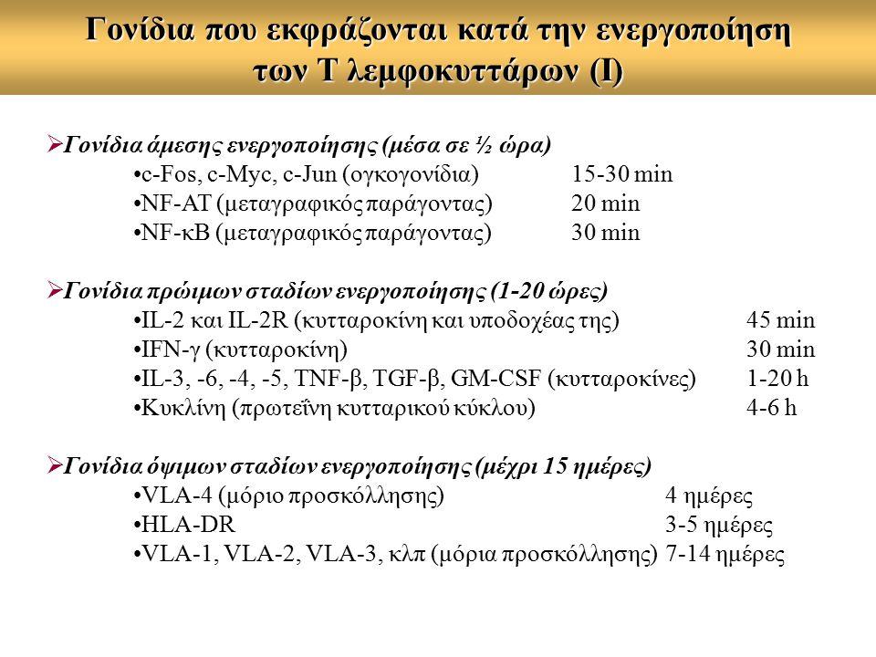Γονίδια που εκφράζονται κατά την ενεργοποίηση των Τ λεμφοκυττάρων (Ι)  Γονίδια άμεσης ενεργοποίησης (μέσα σε ½ ώρα) c-Fos, c-Myc, c-Jun (ογκογονίδια)15-30 min NF-AT (μεταγραφικός παράγοντας)20 min NF-κB (μεταγραφικός παράγοντας)30 min  Γονίδια πρώιμων σταδίων ενεργοποίησης (1-20 ώρες) IL-2 και IL-2R (κυτταροκίνη και υποδοχέας της)45 min IFN-γ (κυτταροκίνη)30 min IL-3, -6, -4, -5, TNF-β, TGF-β, GM-CSF (κυτταροκίνες) 1-20 h Κυκλίνη (πρωτεΐνη κυτταρικού κύκλου)4-6 h  Γονίδια όψιμων σταδίων ενεργοποίησης (μέχρι 15 ημέρες) VLA-4 (μόριο προσκόλλησης) 4 ημέρες HLA-DR 3-5 ημέρες VLA-1, VLA-2, VLA-3, κλπ (μόρια προσκόλλησης) 7-14 ημέρες