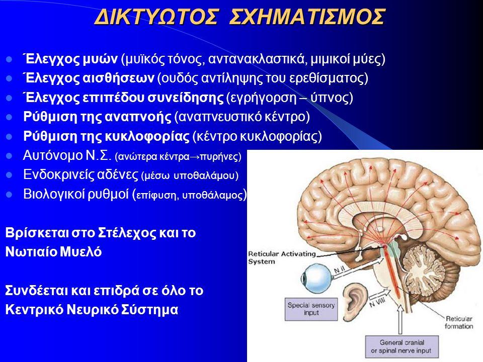 ΔΙΚΤΥΩΤΟΣ ΣΧΗΜΑΤΙΣΜΟΣ Έλεγχος μυών (μυϊκός τόνος, αντανακλαστικά, μιμικοί μύες) Έλεγχος αισθήσεων (ουδός αντίληψης του ερεθίσματος) Έλεγχος επιπέδου σ