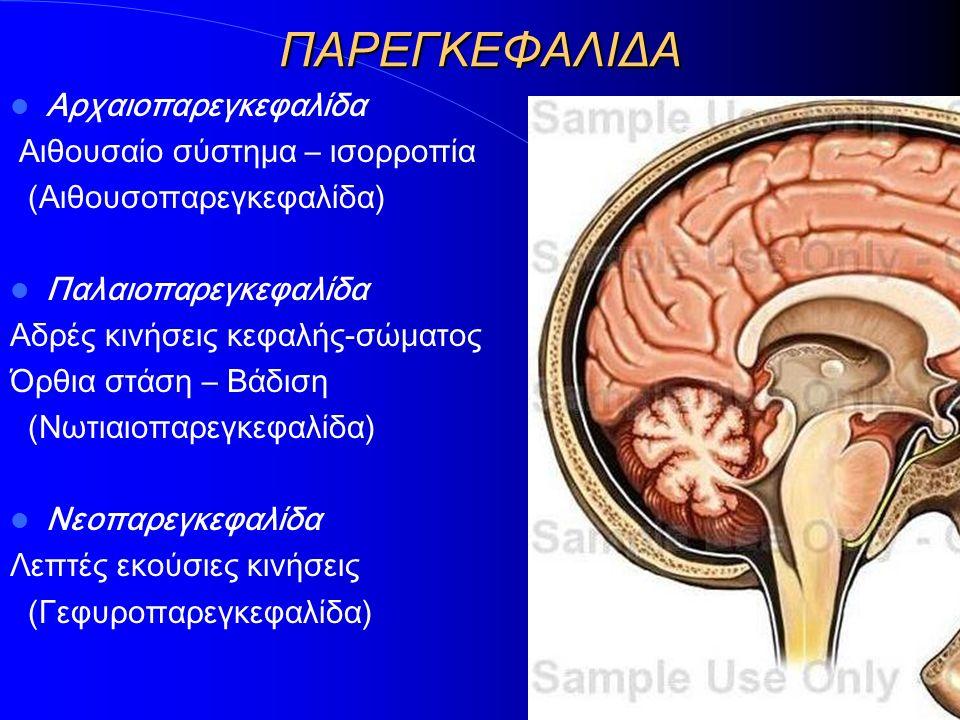 ΠΑΡΕΓΚΕΦΑΛΙΔΑ Αρχαιοπαρεγκεφαλίδα Αιθουσαίο σύστημα – ισορροπία (Αιθουσοπαρεγκεφαλίδα) Παλαιοπαρεγκεφαλίδα Αδρές κινήσεις κεφαλής-σώματος Όρθια στάση