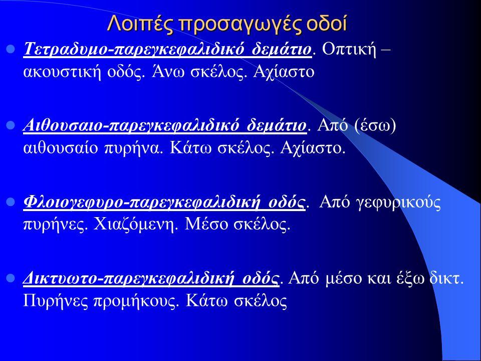 Λοιπές προσαγωγές οδοί Τετραδυμο-παρεγκεφαλιδικό δεμάτιο. Οπτική – ακουστική οδός. Άνω σκέλος. Αχίαστο Αιθουσαιο-παρεγκεφαλιδικό δεμάτιο. Από (έσω) αι