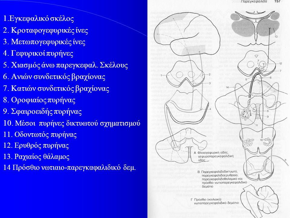 1.Εγκεφαλικό σκέλος 2. Κροταφογεφυρικές ίνες 3. Μετωπογεφυρικές ίνες 4. Γεφυρικοί πυρήνες 5. Χιασμός άνω παρεγκεφαλ. Σκέλους 6. Ανιών συνδετικός βραχί