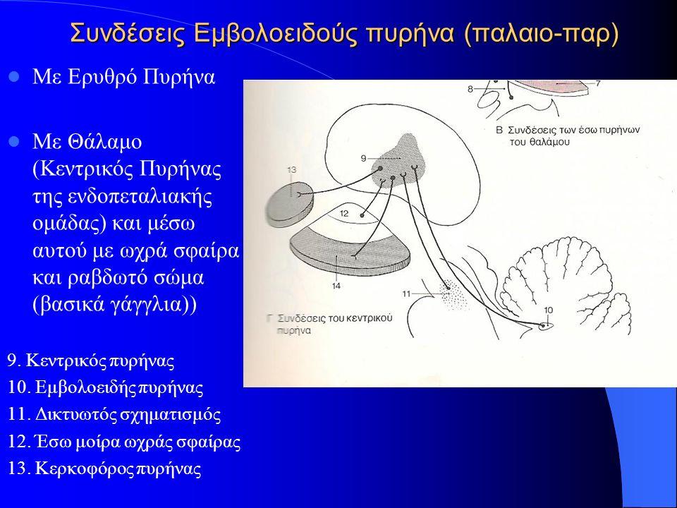 Συνδέσεις Εμβολοειδούς πυρήνα (παλαιο-παρ) Με Ερυθρό Πυρήνα Με Θάλαμο (Κεντρικός Πυρήνας της ενδοπεταλιακής ομάδας) και μέσω αυτού με ωχρά σφαίρα και