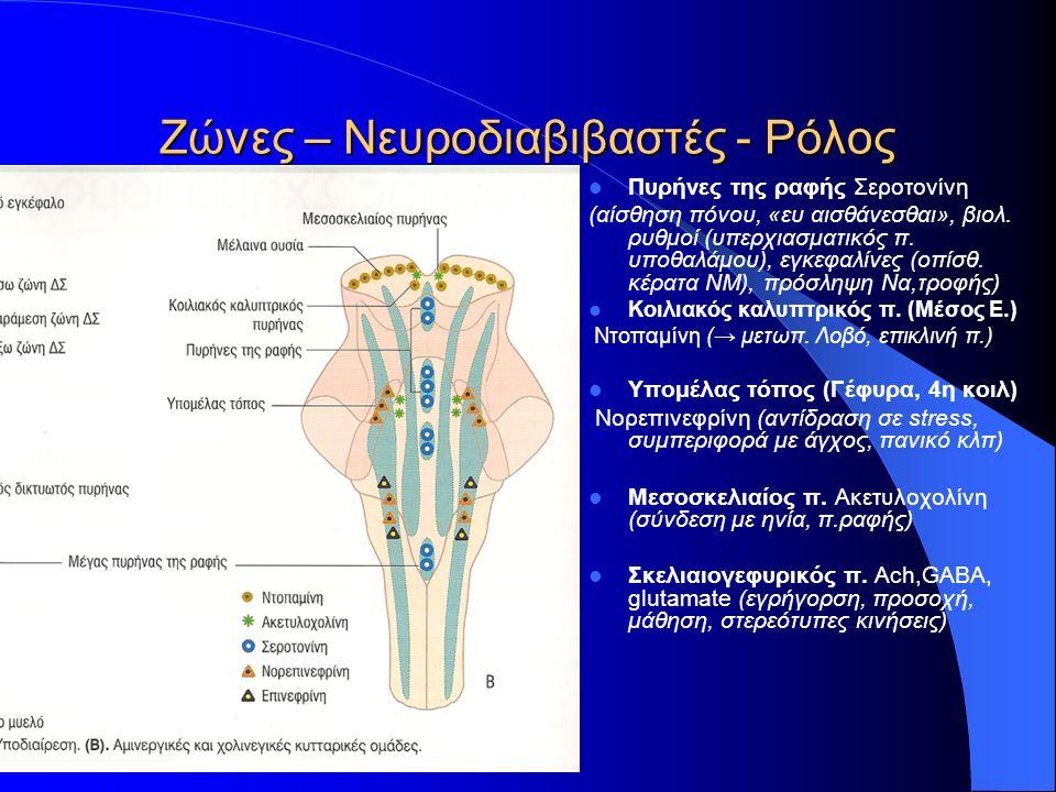 Ζώνες – Νευροδιαβιβαστές - Ρόλος Πυρήνες της ραφής Σεροτονίνη (αίσθηση πόνου, «ευ αισθάνεσθαι», βιολ. ρυθμοί (υπερχιασματικός π. υποθαλάμου), εγκεφαλί