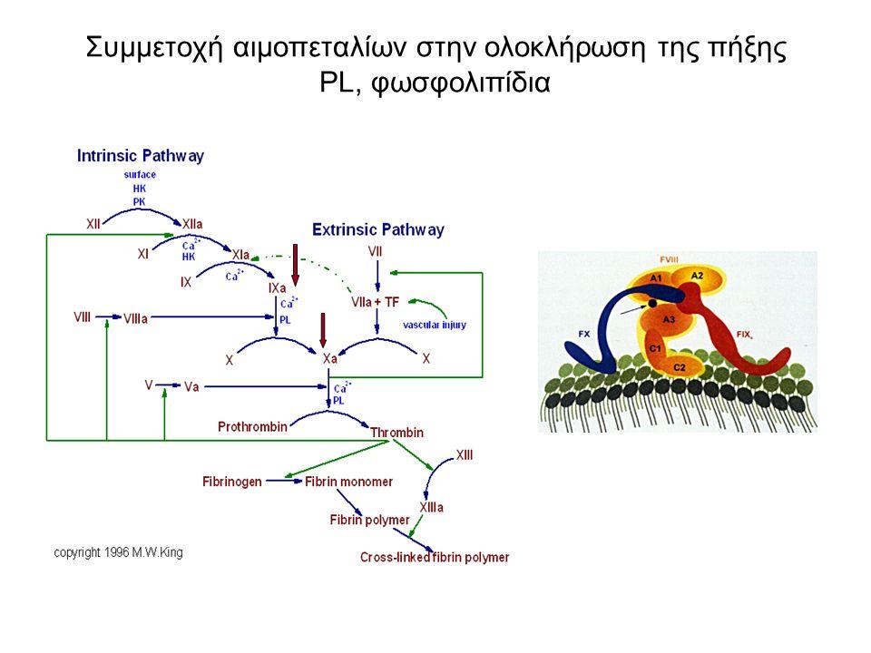 Συμμετοχή αιμοπεταλίων στην ολοκλήρωση της πήξης PL, φωσφολιπίδια