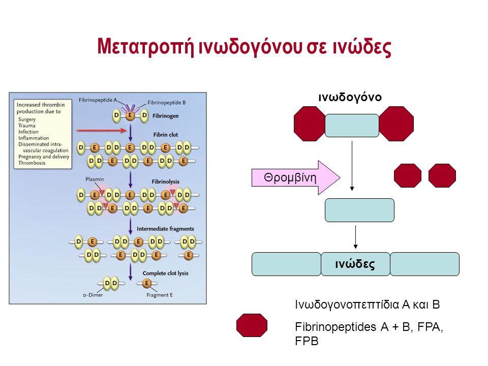 Μετατροπή ινωδογόνου σε ινώδες Θρομβίνη ινώδες Ινωδογονοπεπτίδια Α και Β Fibrinopeptides A + B, FPA, FPB ινωδογόνο