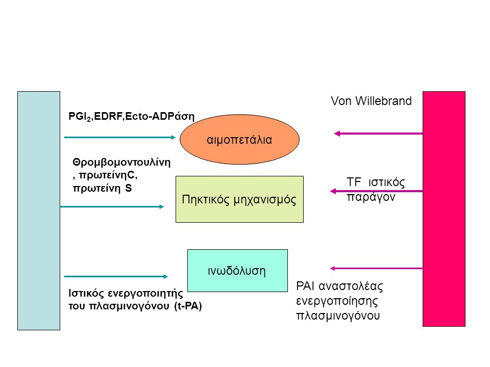 Von Willebrand αιμοπετάλια TF ιστικός παράγον PAI αναστολέας ενεργοποίησης πλασμινογόνου Πηκτικός μηχανισμός ινωδόλυση PGI 2,EDRF,Ecto-ADPάση Θρομβομοντουλίνη, πρωτείνηC, πρωτείνη S Ιστικός ενεργοποιητής του πλασμινογόνου (t-PA)