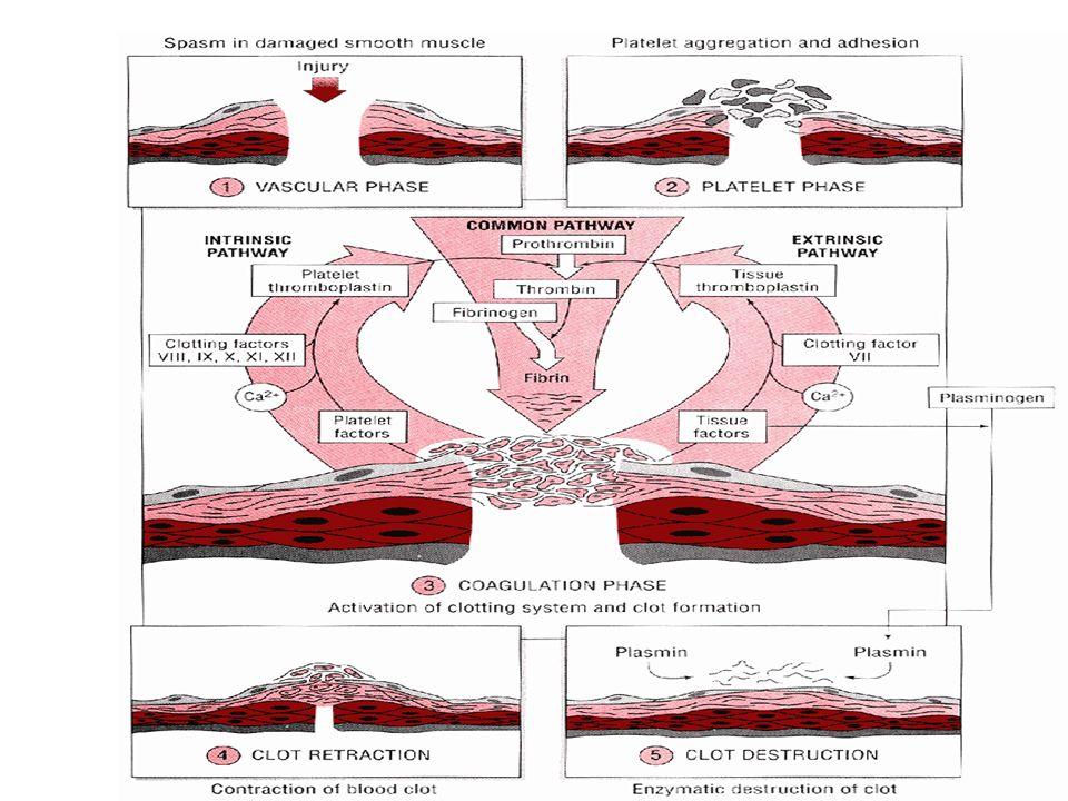 Σύσπαση αγγείου (sec) Αδρεναλίνη Νοραδρεναλίνη Θρομβοξήνη Α2 Μείωση ροής αίματος Σμίκρυνση εύρους αγγείου (40%) Πρωτογενής αιμόσταση (3-10min) Σχηματισμός αιμοπεταλιακού θρόμβου