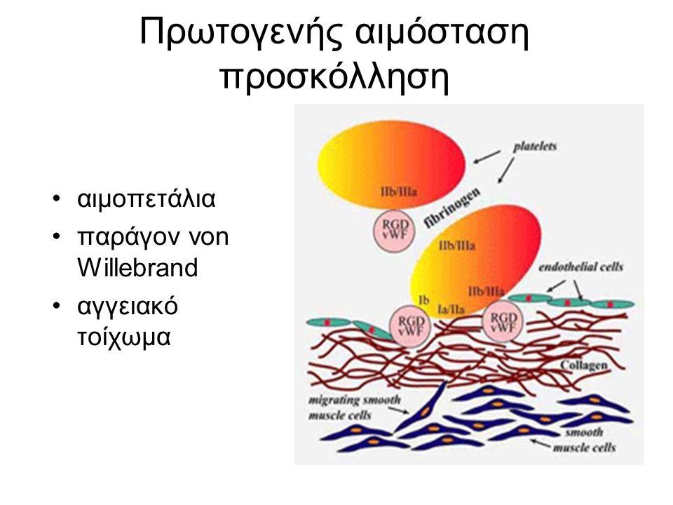 Πρωτογενής αιμόσταση προσκόλληση αιμοπετάλια παράγον von Willebrand αγγειακό τοίχωμα