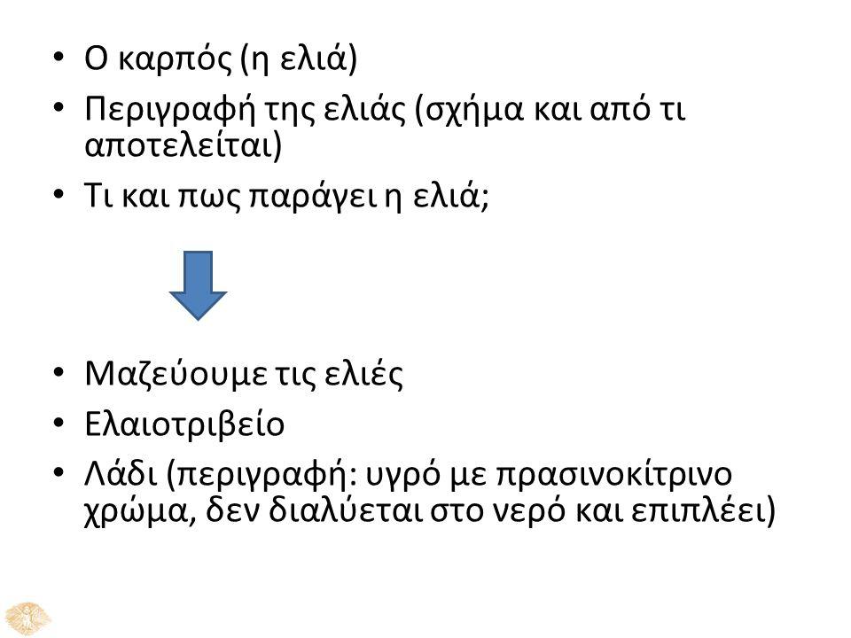 Ο καρπός (η ελιά) Περιγραφή της ελιάς (σχήμα και από τι αποτελείται) Τι και πως παράγει η ελιά; Μαζεύουμε τις ελιές Ελαιοτριβείο Λάδι (περιγραφή: υγρό με πρασινοκίτρινο χρώμα, δεν διαλύεται στο νερό και επιπλέει)