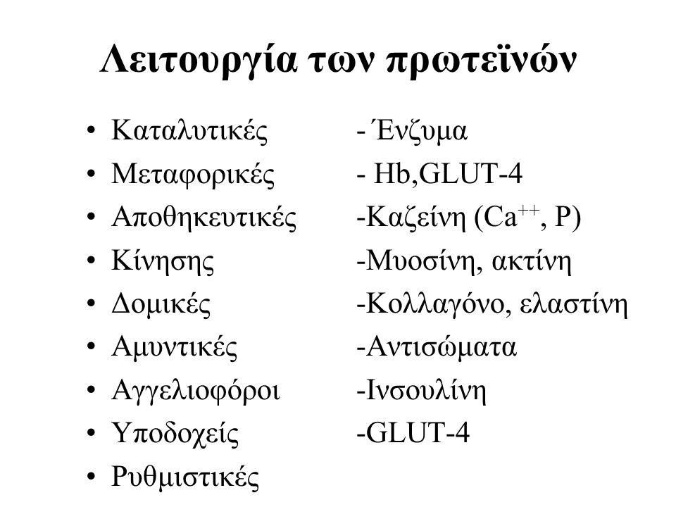 Λειτουργία των πρωτεϊνών Καταλυτικές - Ένζυμα Μεταφορικές- Ηb,GLUT-4 Αποθηκευτικές-Καζείνη (Ca ++, P) Κίνησης-Μυοσίνη, ακτίνη Δομικές-Κολλαγόνο, ελαστ