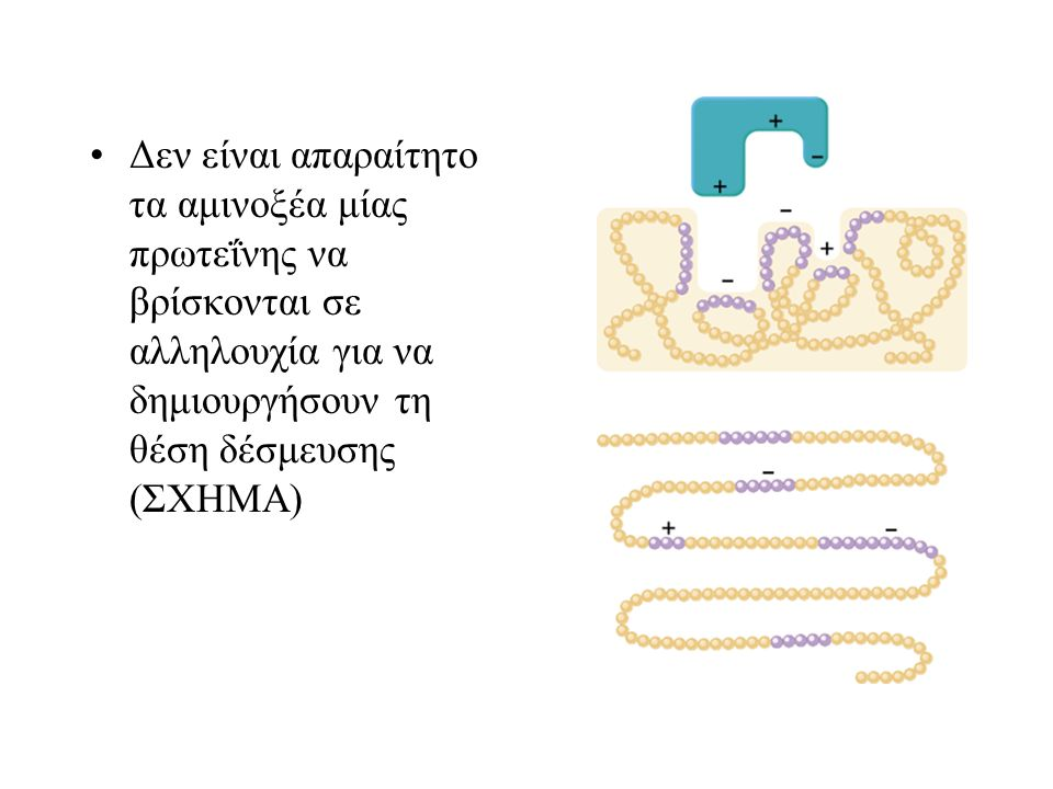 Δεν είναι απαραίτητο τα αμινοξέα μίας πρωτεΐνης να βρίσκονται σε αλληλουχία για να δημιουργήσουν τη θέση δέσμευσης (ΣΧΗΜΑ)