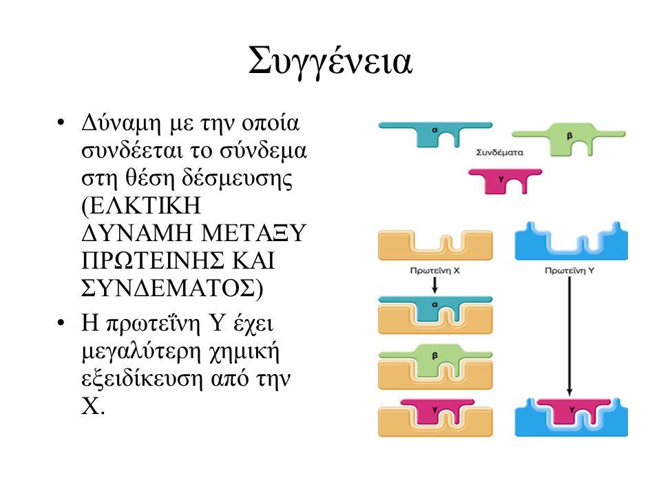 Συγγένεια Δύναμη με την οποία συνδέεται το σύνδεμα στη θέση δέσμευσης (ΕΛΚΤΙΚΗ ΔΥΝΑΜΗ ΜΕΤΑΞΥ ΠΡΩΤΕΙΝΗΣ ΚΑΙ ΣΥΝΔΕΜΑΤΟΣ) Η πρωτεΐνη Υ έχει μεγαλύτερη χη