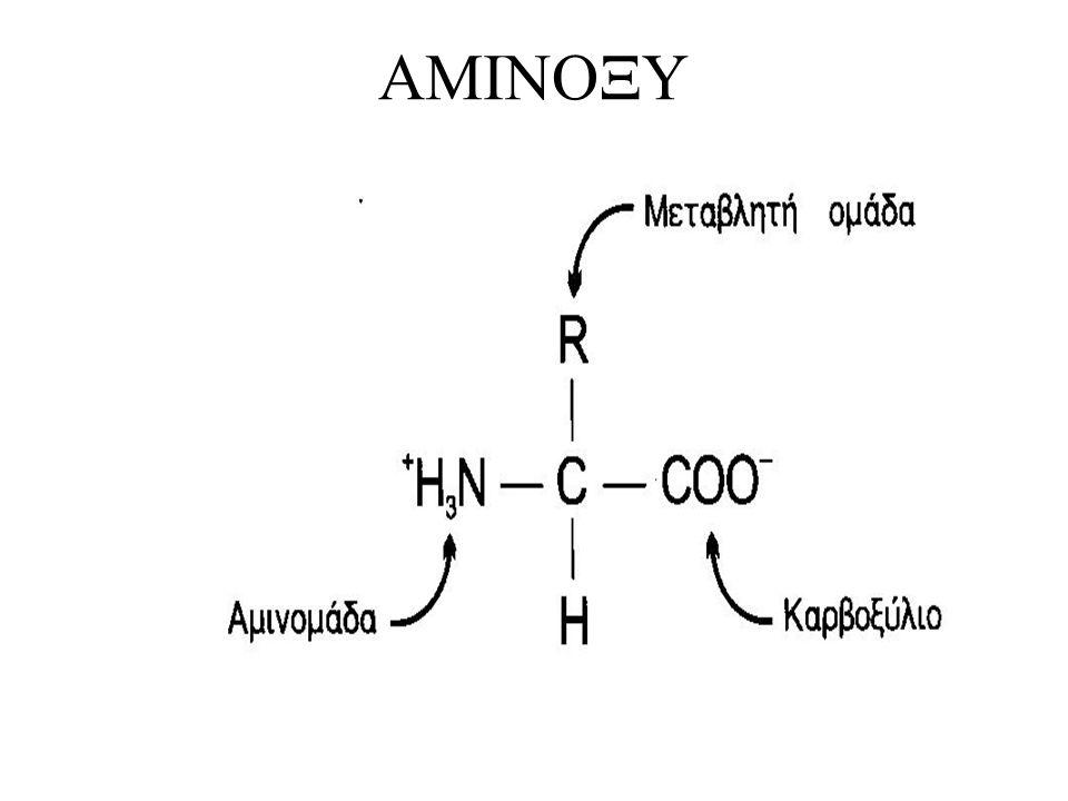 Διαχωρισμός Αμινοξέων Απαραίτητα- μη-απαραίτητα Διακλαδισμένης πλευρικής αλυσίδας- Μέγεθος Υδρόφοβες ομάδες » Συνάφεια νερού Υδρόφιλες ομάδες