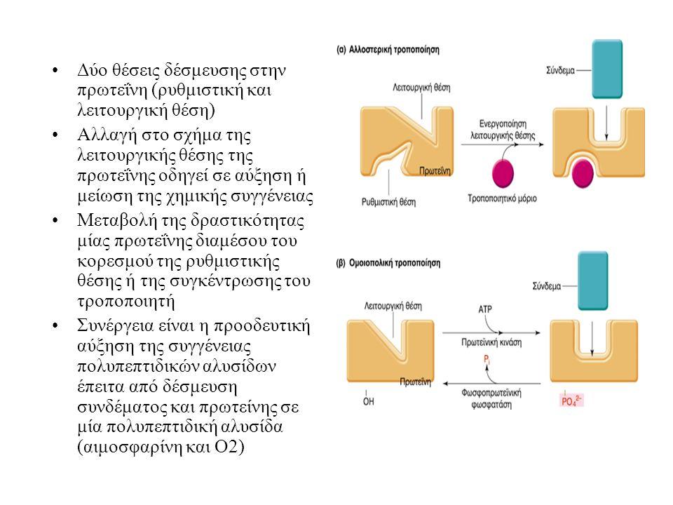 Δύο θέσεις δέσμευσης στην πρωτεΐνη (ρυθμιστική και λειτουργική θέση) Αλλαγή στο σχήμα της λειτουργικής θέσης της πρωτεΐνης οδηγεί σε αύξηση ή μείωση τ