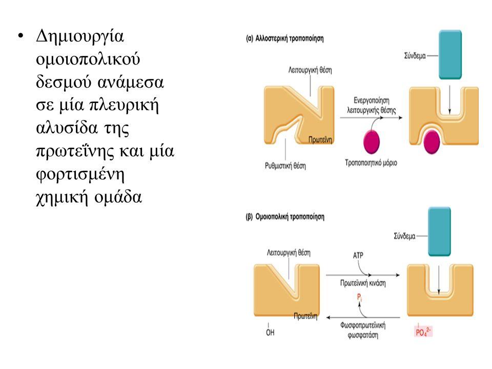 Δημιουργία ομοιοπολικού δεσμού ανάμεσα σε μία πλευρική αλυσίδα της πρωτεΐνης και μία φορτισμένη χημική ομάδα