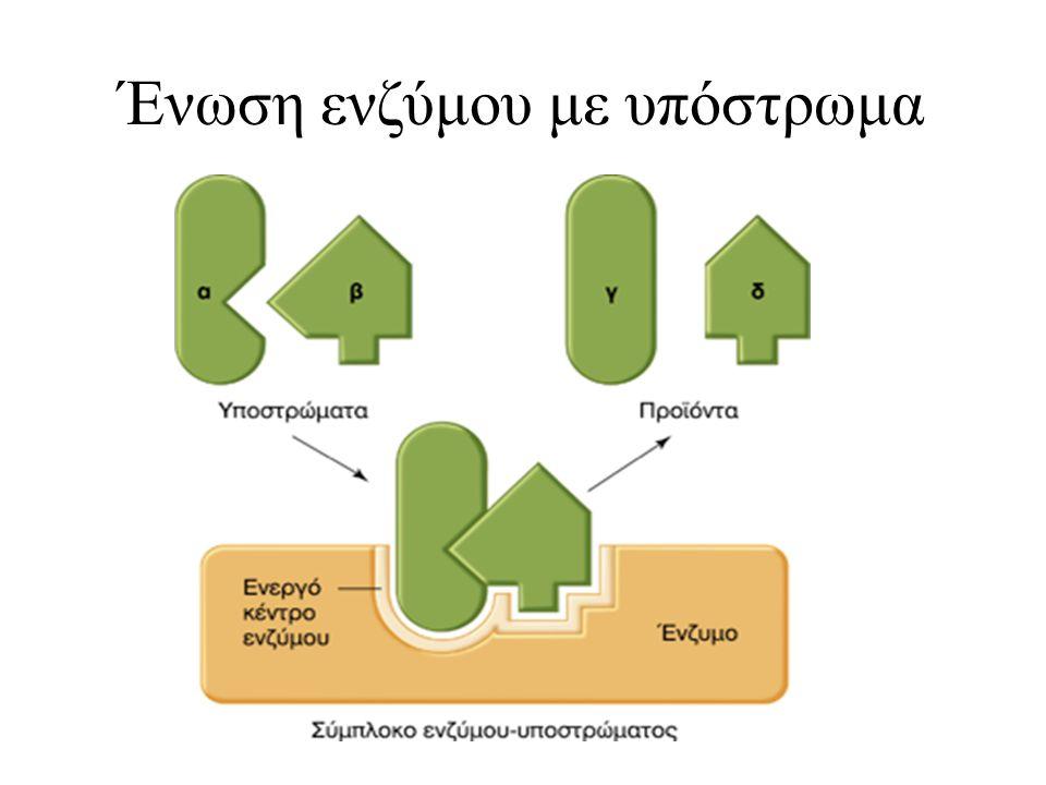 Ένωση ενζύμου με υπόστρωμα