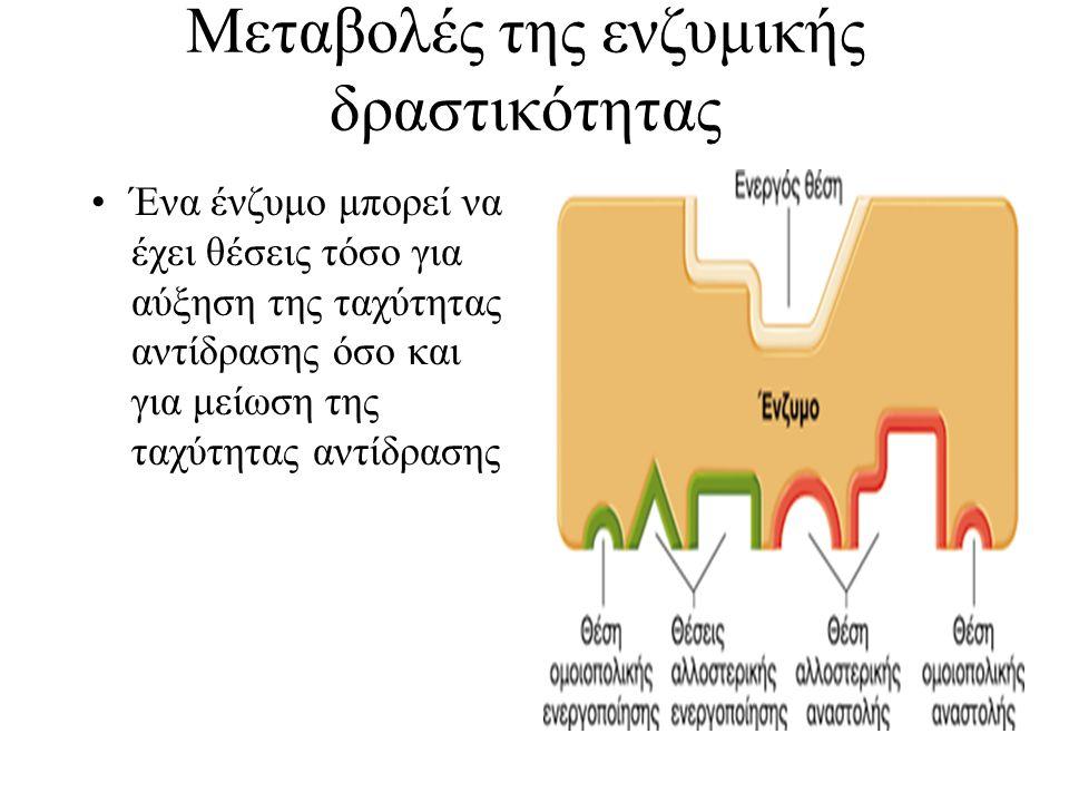 Μεταβολές της ενζυμικής δραστικότητας Ένα ένζυμο μπορεί να έχει θέσεις τόσο για αύξηση της ταχύτητας αντίδρασης όσο και για μείωση της ταχύτητας αντίδ