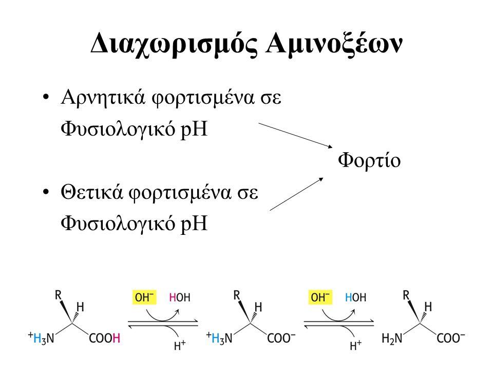 Διαχωρισμός Αμινοξέων Αρνητικά φορτισμένα σε Φυσιολογικό pH Φορτίο Θετικά φορτισμένα σε Φυσιολογικό pH