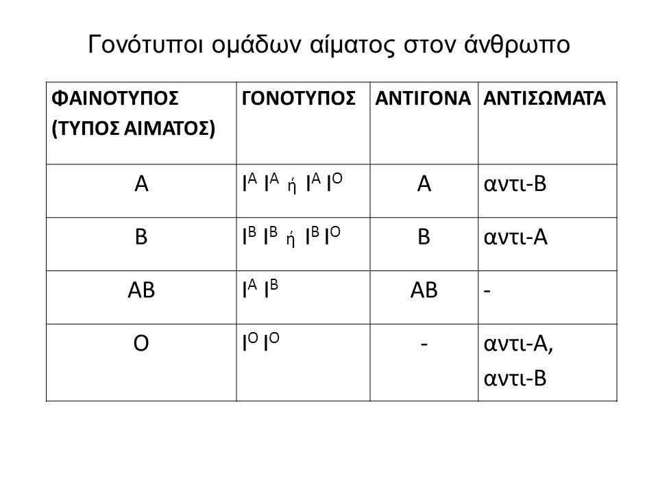 Γονότυποι ομάδων αίματος στον άνθρωπο ΦΑΙΝΟΤΥΠΟΣ (ΤΥΠΟΣ ΑΙΜΑΤΟΣ) ΓΟΝΟΤΥΠΟΣΑΝΤΙΓΟΝΑΑΝΤΙΣΩΜΑΤΑ ΑΙ Α Ι Α ή Ι Α Ι Ο Ααντι-Β ΒΙ Β Ι Β ή Ι Β Ι Ο Βαντι-Α ΑΒΙ