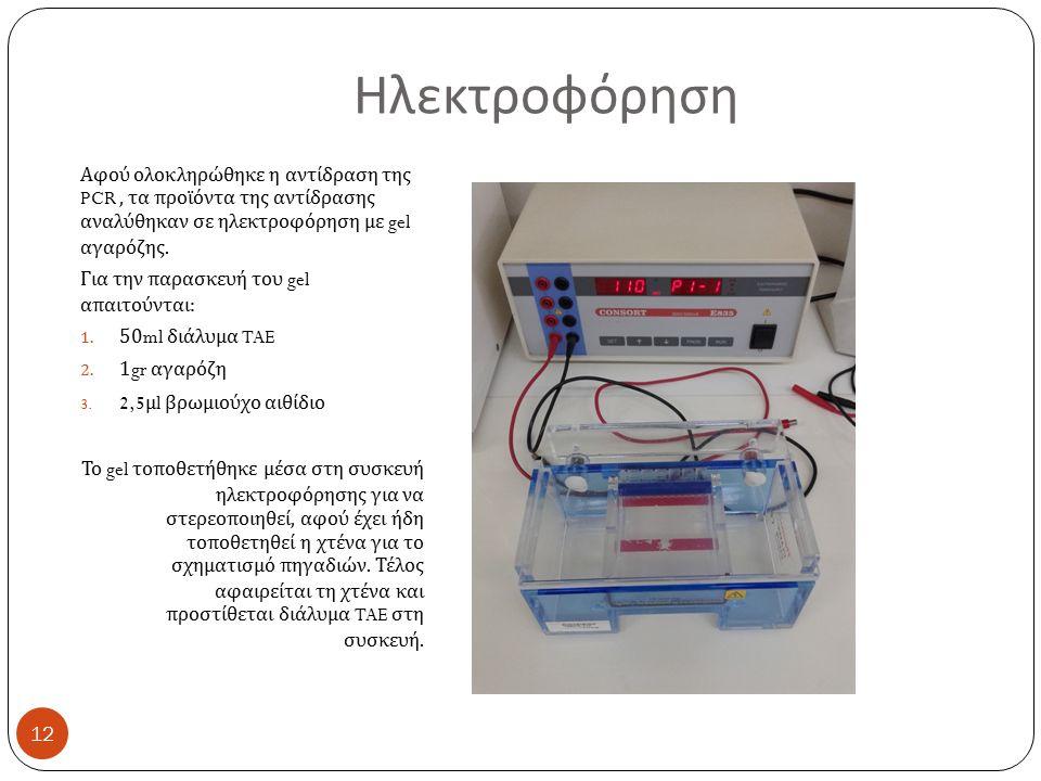 Ηλεκτροφόρηση Αφού ολοκληρώθηκε η αντίδραση της PCR, τα προϊόντα της αντίδρασης αναλύθηκαν σε ηλεκτροφόρηση με gel αγαρόζης.
