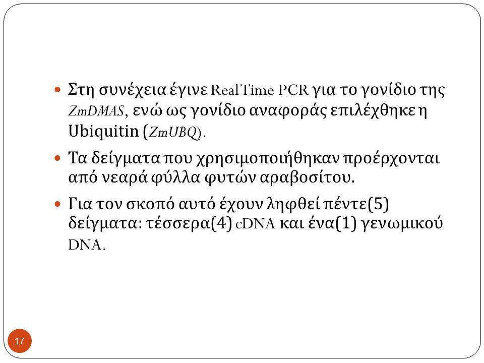 Στη συνέχεια έγινε Real Time PCR για το γονίδιο της ZmDMAS, ενώ ως γονίδιο αναφοράς επιλέχθηκε η Ubiquitin (ZmUBQ).