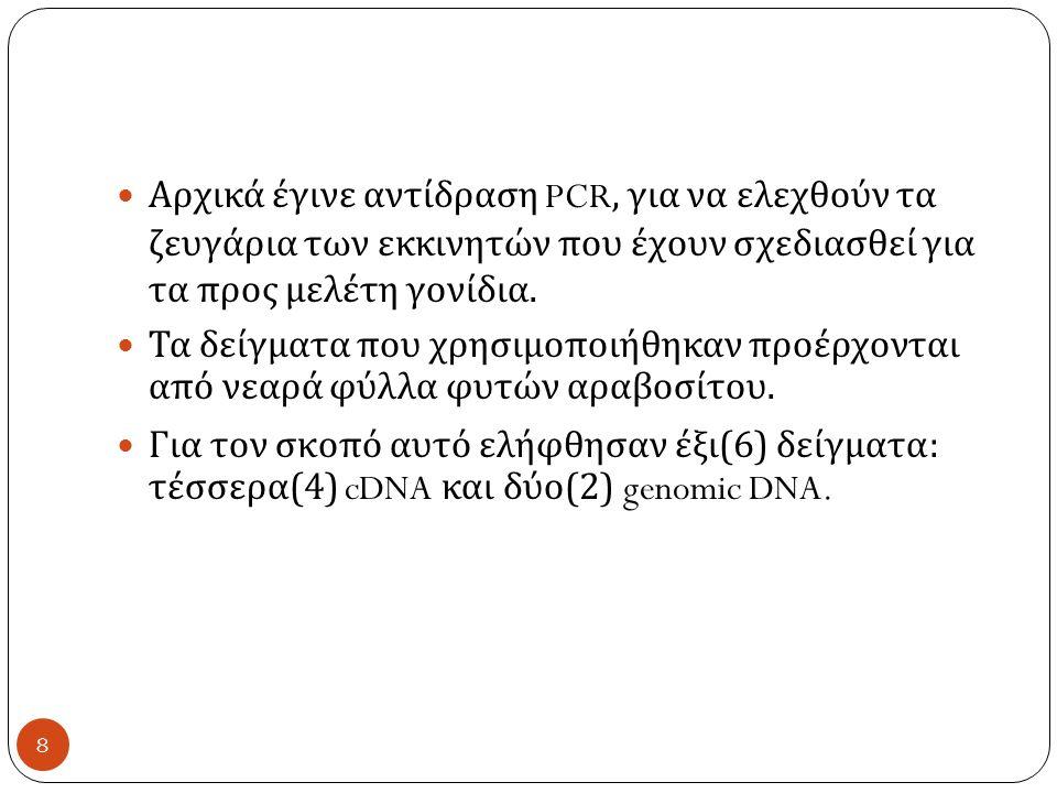 Αρχικά έγινε αντίδραση PCR, για να ελεχθούν τα ζευγάρια των εκκινητών που έχουν σχεδιασθεί για τα προς μελέτη γονίδια.