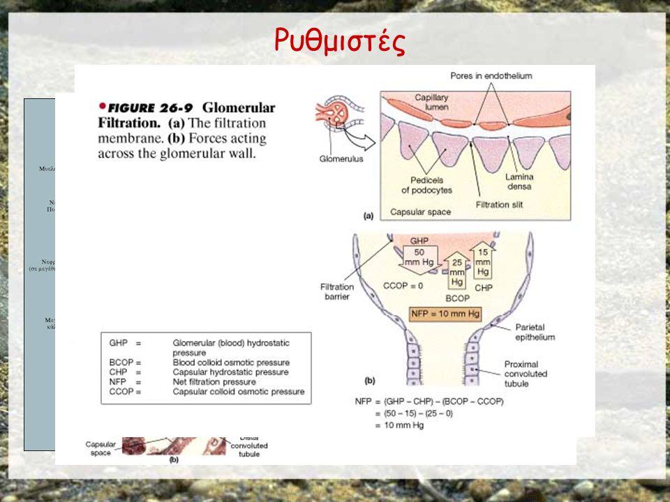 ΣΠΕΙΡΑΜΑΤΙΚΗ ΔΙΗΘΗΣΗ Αυτή η προσομοίωση επιτρέπει τη διερεύνηση μιας από τις κύριες λειτουργίες του νεφρώνα, τη σπειραματική διήθηση