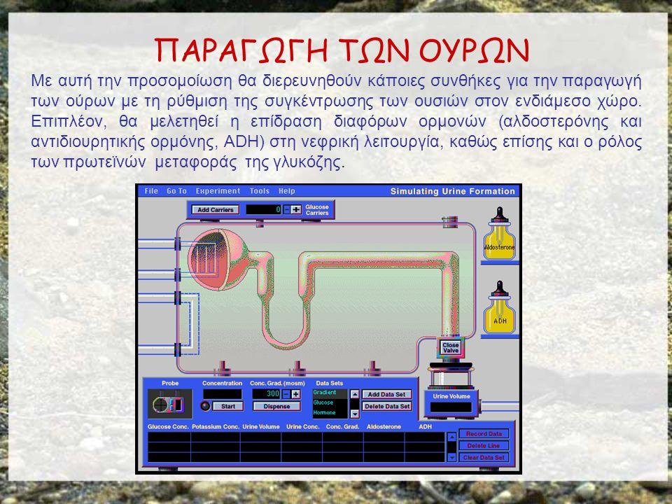 ΠΑΡΑΓΩΓΗ ΤΩΝ ΟΥΡΩΝ Με αυτή την προσομοίωση θα διερευνηθούν κάποιες συνθήκες για την παραγωγή των ούρων με τη ρύθμιση της συγκέντρωσης των ουσιών στον ενδιάμεσο χώρο.