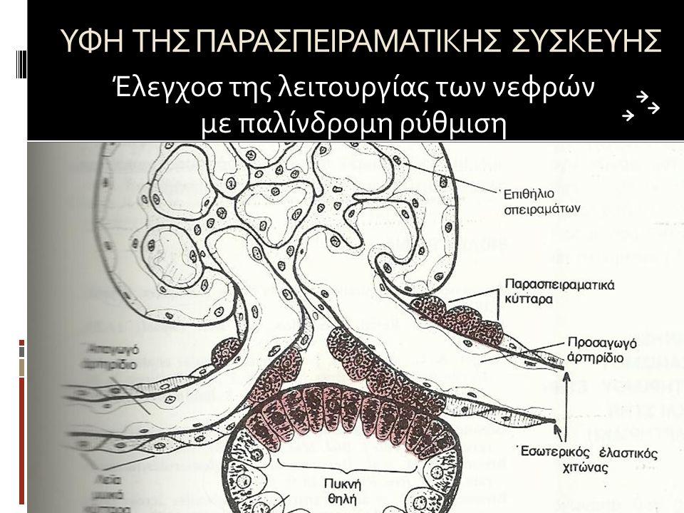 ΥΦΗ ΤΗΣ ΠΑΡΑΣΠΕΙΡΑΜΑΤΙΚΗΣ ΣΥΣΚΕΥΗΣ Έλεγχοσ της λειτουργίας των νεφρών με παλίνδρομη ρύθμιση