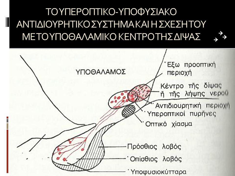 ΤΟ ΥΠΕΡΟΠΤΙΚΟ-ΥΠΟΦΥΣΙΑΚΟ ΑΝΤΙΔΙΟΥΡΗΤΙΚΟ ΣΥΣΤΗΜΑ ΚΑΙ Η ΣΧΕΣΗ ΤΟΥ ΜΕ ΤΟ ΥΠΟΘΑΛΑΜΙΚΟ ΚΕΝΤΡΟ ΤΗΣ ΔΙΨΑΣ