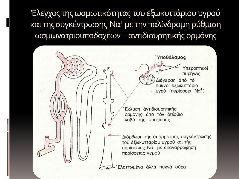 Έλεγχος της ωσμωτικότητας του εξωκυττάριου υγρού και της συγκέντρωσης Να + με την παλίνδρομη ρύθμιση ωσμωνατριουποδοχέων – αντιδιουρητικής ορμόνης