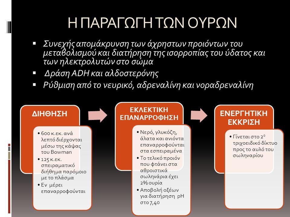 Η ΠΑΡΑΓΩΓΗ ΤΩΝ ΟΥΡΩΝ  Συνεχής απομάκρυνση των άχρηστων προιόντων του μεταβολισμού και διατήρηση της ισορροπίας του ύδατος και των ηλεκτρολυτών στο σώμα  Δράση ADH και αλδοστερόνης  Ρύθμιση από το νευρικό, αδρεναλίνη και νοραδρεναλίνη