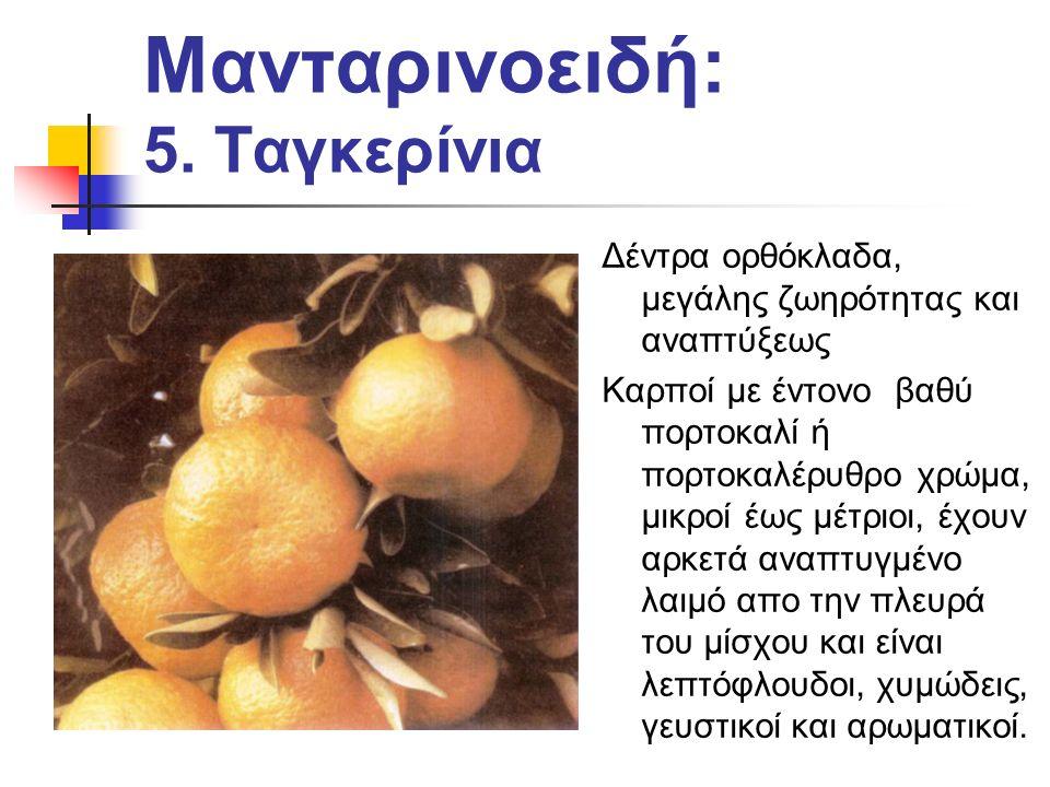 Μανταρινοειδή: 5.