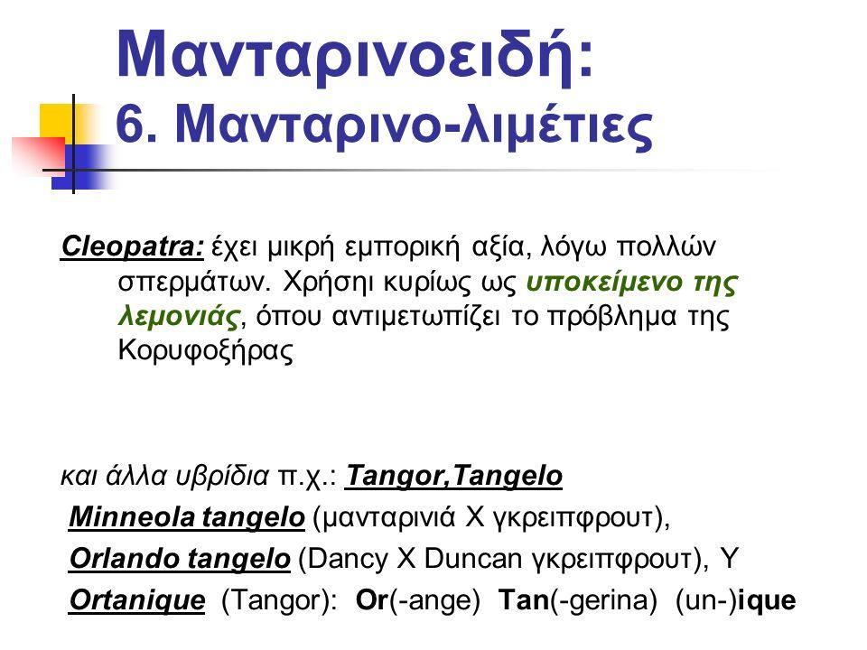 Μανταρινοειδή: 6. Μανταρινο-λιμέτιες Cleopatra: έχει μικρή εμπορική αξία, λόγω πολλών σπερμάτων.