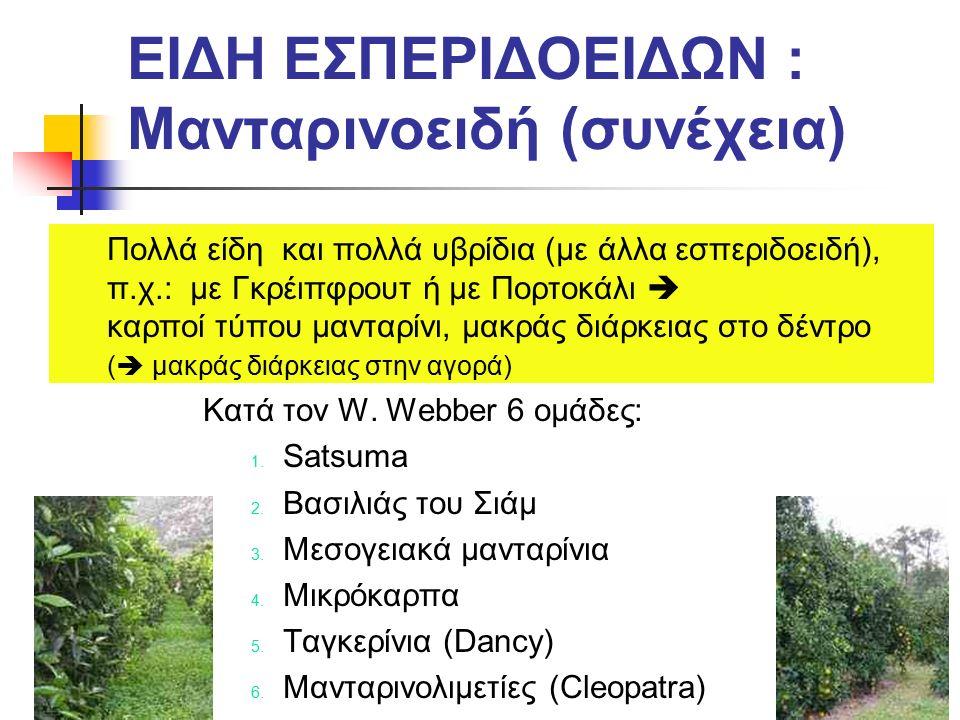 Μανταρινοειδή: 1.Σατσούμες (Satsuma) Από την Ιαπωνία (αρχικά, μετά και από την Ισπανία): Ποικιλίες πλαγιόκλαδες, φύλλα μεγάλα, έντονα πράσινα, με τη μεγαλύτερη αντοχή σε χαμηλές θερμοκρασίες (ιδίως πάνω σε τρίφυλλη πορτοκαλιά).