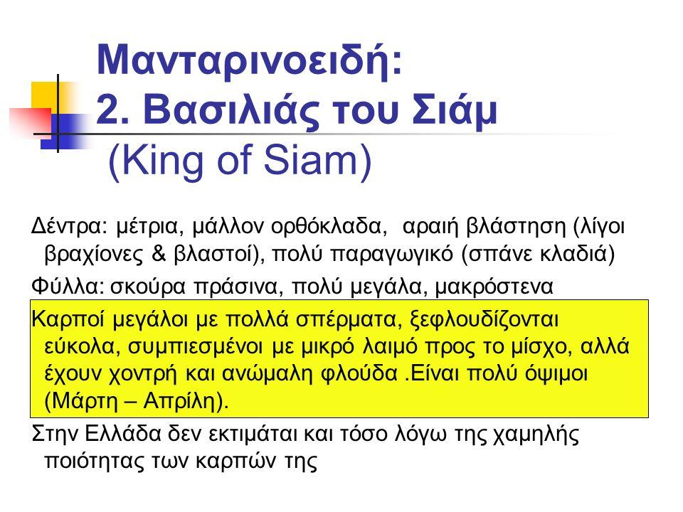 Encore: Κοινό X King of Siam.Ωριμάζει 3 ο ως 5 ο.