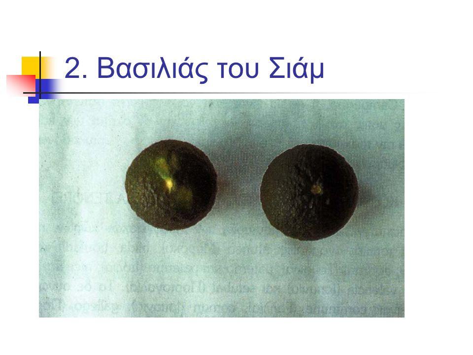 Μανταρινοειδή: 3.