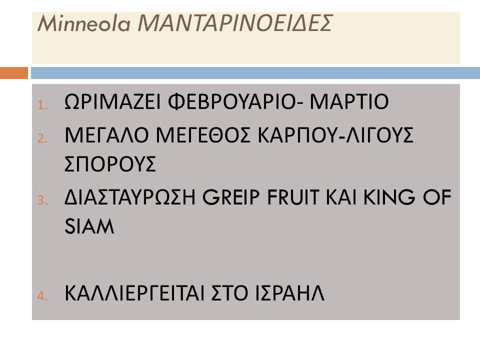 Minneola ΜΑΝΤΑΡΙΝΟΕΙΔΕΣ 1. ΩΡΙΜΑΖΕΙ ΦΕΒΡΟΥΑΡΙΟ - ΜΑΡΤΙΟ 2.